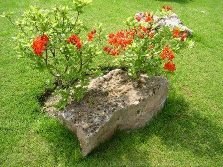 Растения на камне, гипертуф, арт бетон